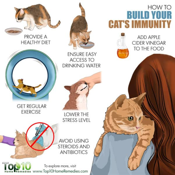 how to build cat's immunity