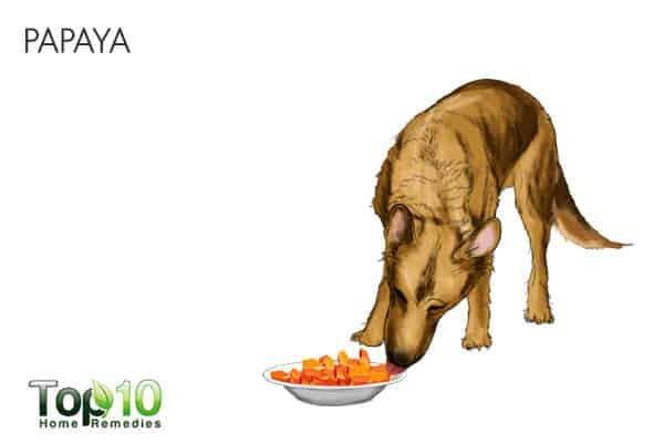 papaya for tapeworms in dogs
