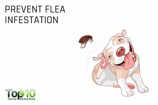 prevent flea infestation for tapeworm in dogs