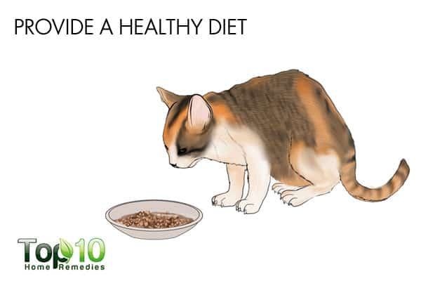 healthy diet to build cat's immunity