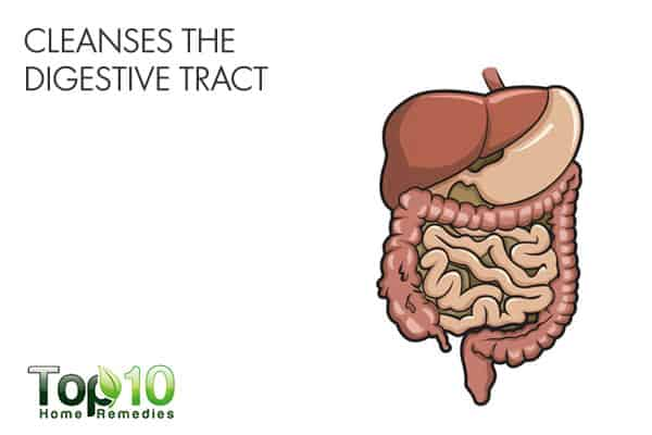 warm water cleanses the digestive tract