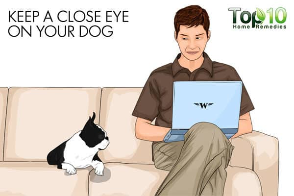 keep a close eye on your aged dog to avoid injury