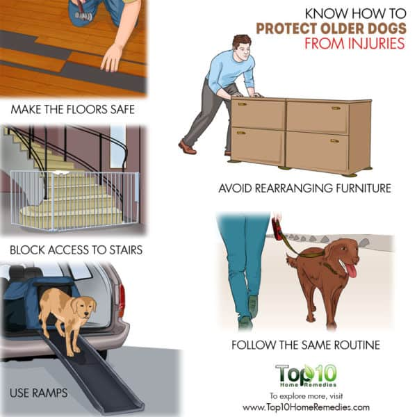 how to protect old dog from injuries