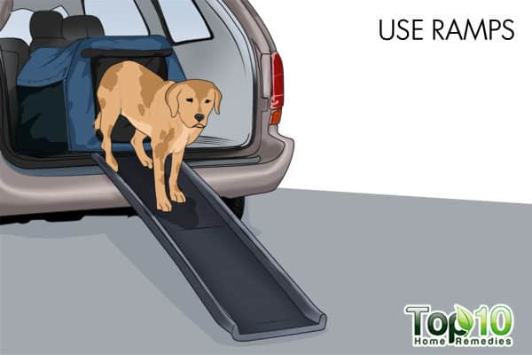 use dog ramps for old dogs