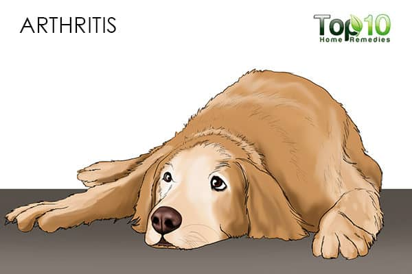 arthritis in senior dogs