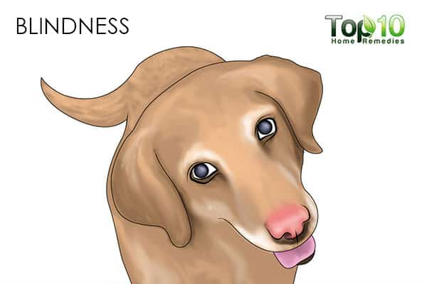blindness in senior dogs
