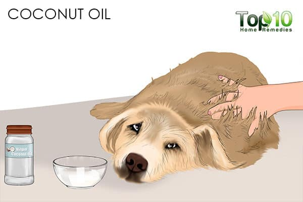 coconut oil how to deal with matted hair on your cat and dog