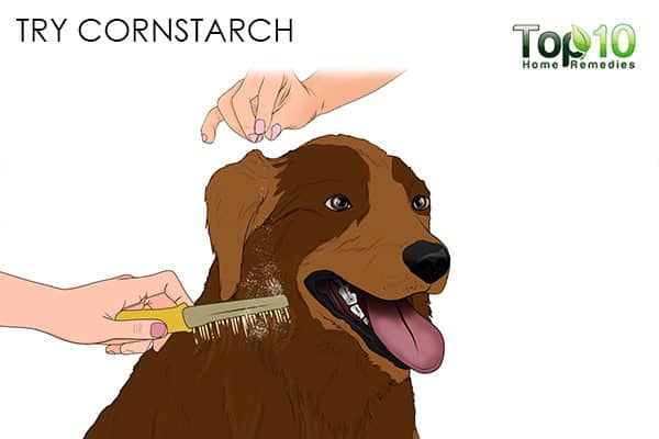 cornstarch how to deal with matted hair on your cat and dog