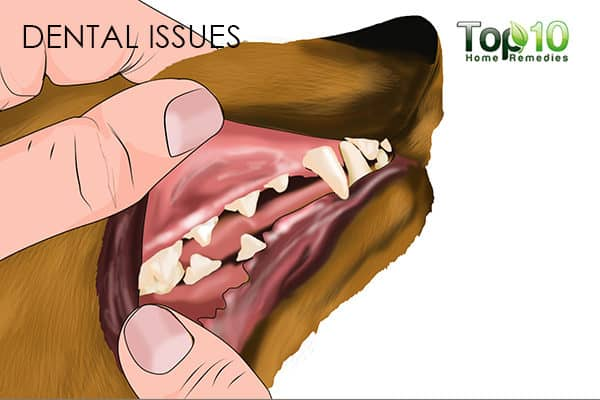 dental issues in senior dogs
