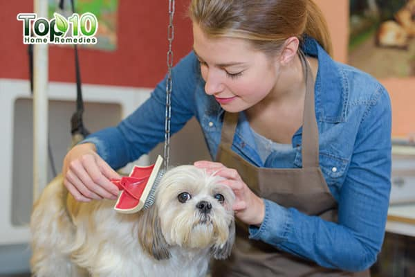intro how to deal with matted hair on your cat and dog
