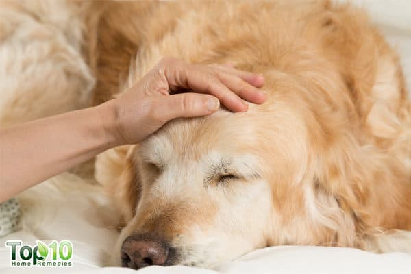 signs of sesonal allergy in dogs