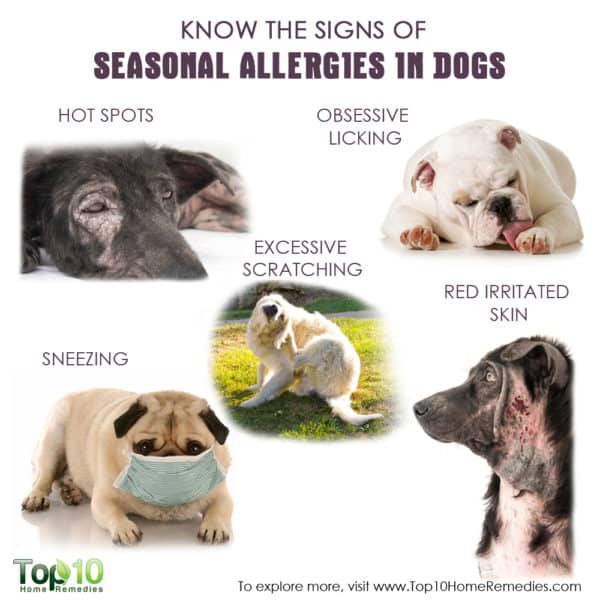 Home Remedies For Dogs With Severe Itchy Skin