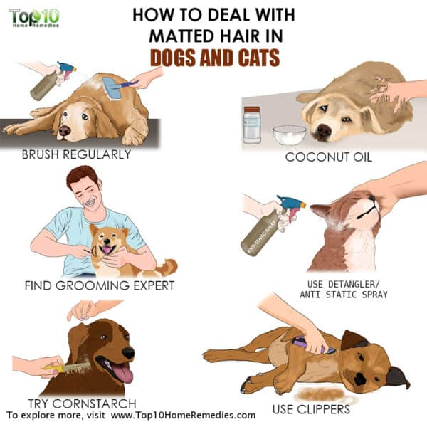 main image how to deal with matted hair on cat or dogs