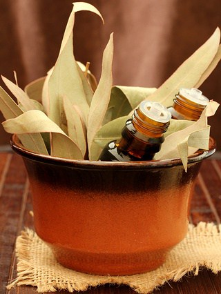 reasons why you need to have a bottle of eucalyptus oil