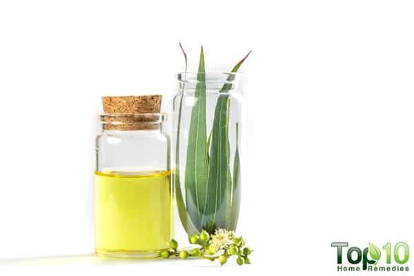 Eucalyptus Oil Natural Disinfectant