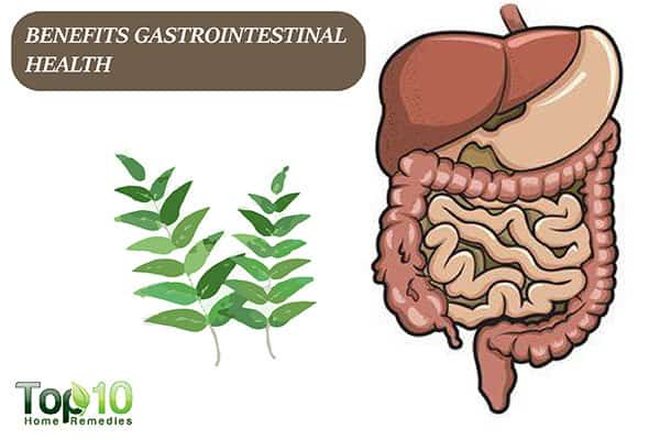 curry leaves benefit gastrointestinal health