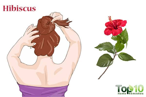 hibiscus to treat hair loss