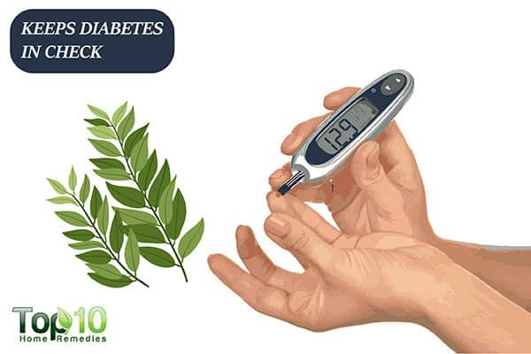 curry leaves keep diabetes in check