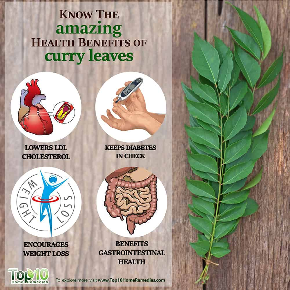 studies on dehydration of curry leaves R k dehydration - exporter, manufacturer, distributor, supplier, trading company of dehydrated curry leaves powder based in jamnagar, india.