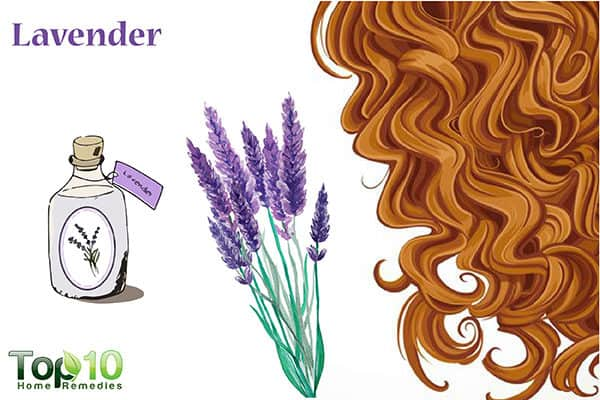 lavender to treat hair loss