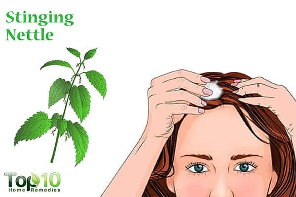 stinging nettle for hair loss