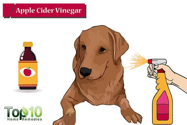 apple cider vinegar to treat hot spots on dogs