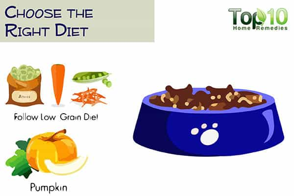 choose the right diet for your older dog