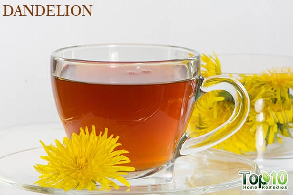 dandelion for fatty liver disease