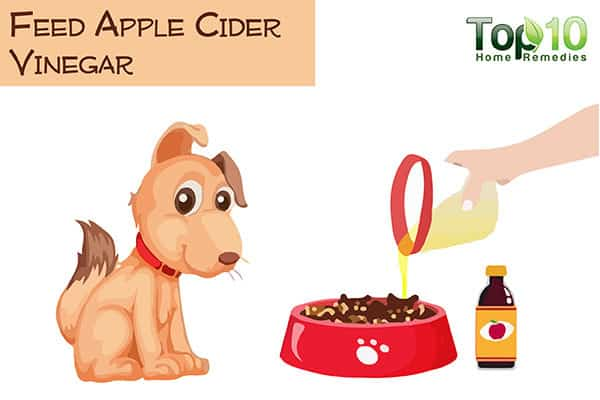 feed apple cider vinegar to your aging dog