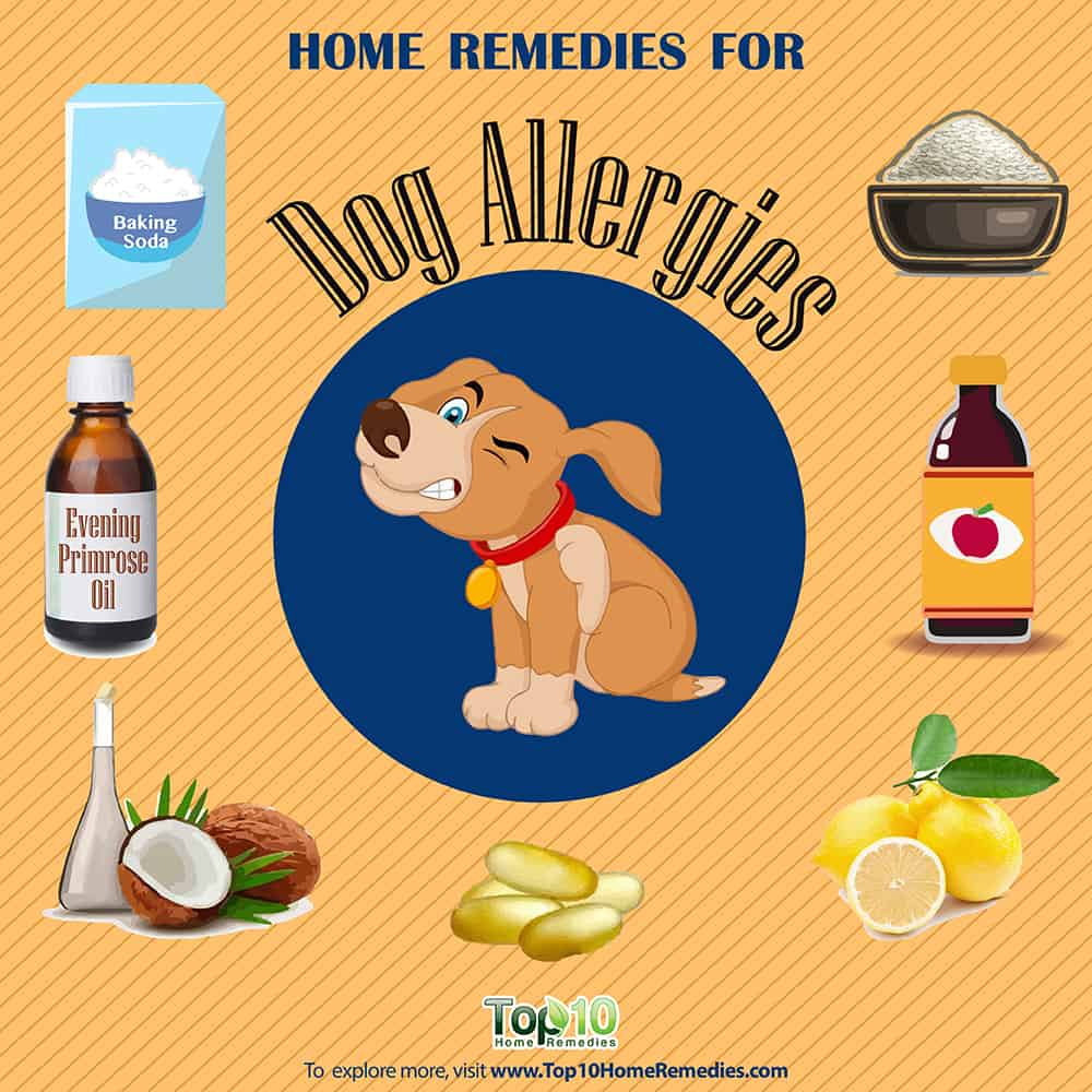 Allergies In Dogs: Treatment With Natural Remedies