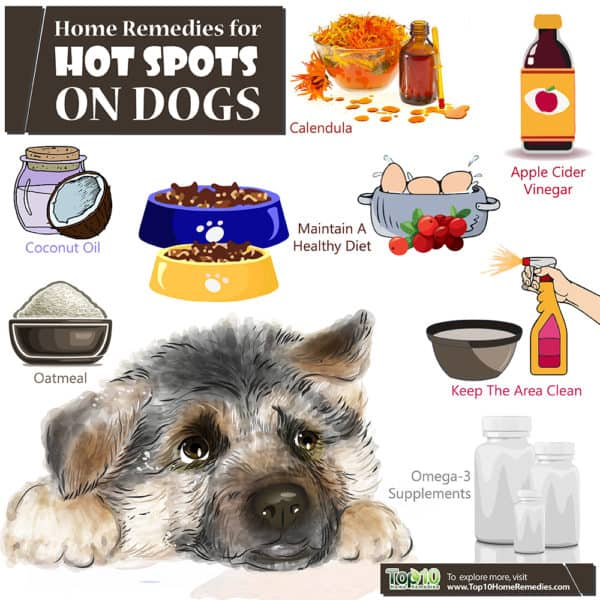 Home Remedies Treating Dog Hot Spots