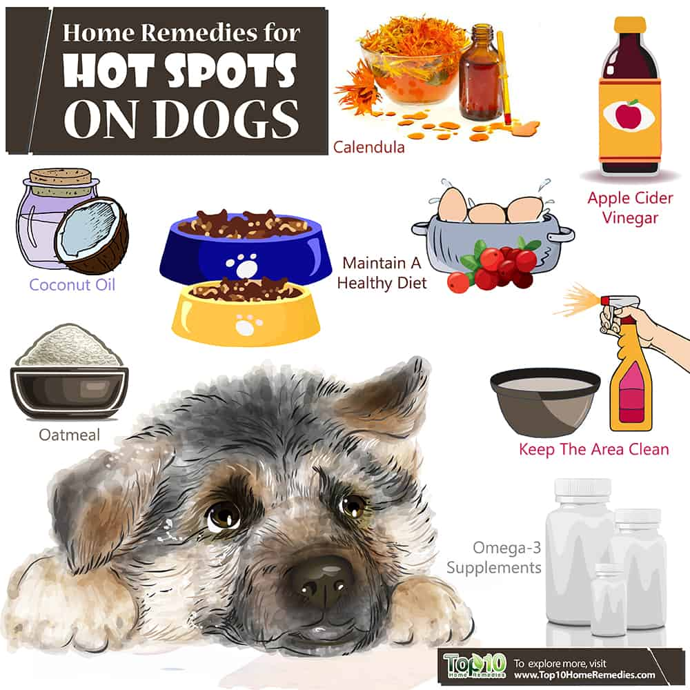 Hot Spots On Dog Home Remedies