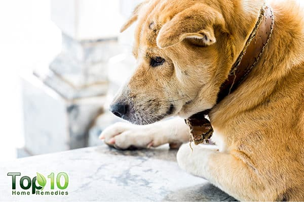how to help your aging dog