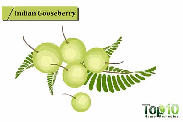 indian gooseberries for receding gums