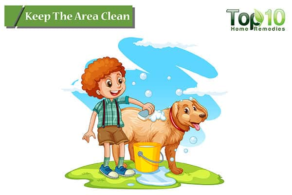keep the area clean to prevent and treat hot spots on dogs