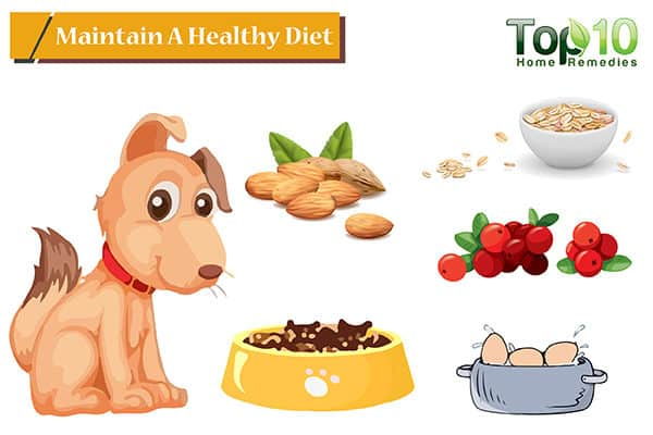 healthy diet to heal hot spots on dogs