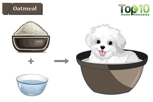 oatmeal for hot spots on dogs
