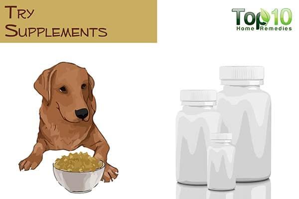 Best Supplement For Senior Dog Arthritis