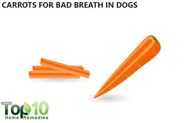 carrot for bad breath in dogs