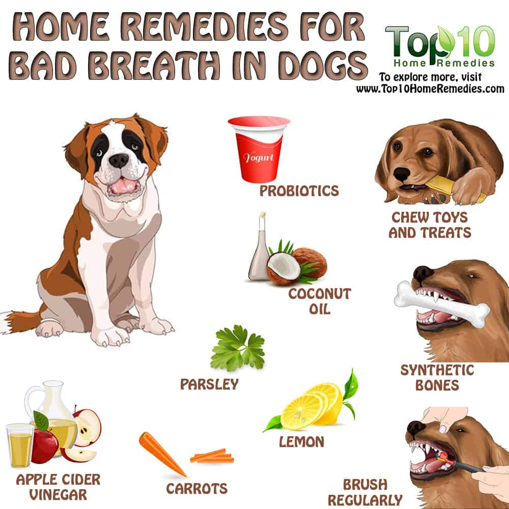 How To Treat My Dogs Bad Breath