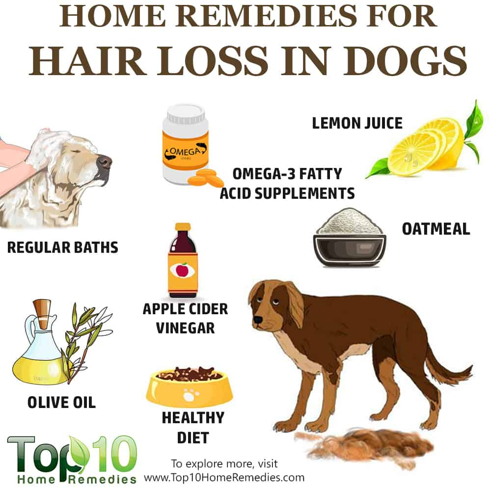 10 Home Remedies To Help With Hair Loss In Dogs Top 10 Home Remedies