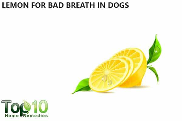 lemon for dog bad breath