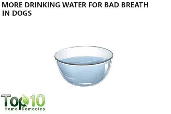 more drinking water for dog with bad breath