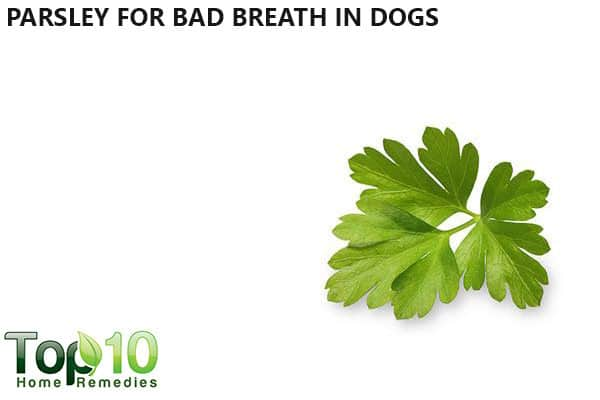 parsley for bad breath in dogs