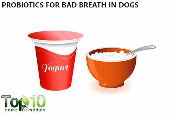 probiotic for bad breath in dogs