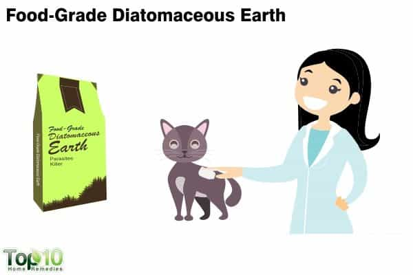 diatomaceous earth for fleas on cats