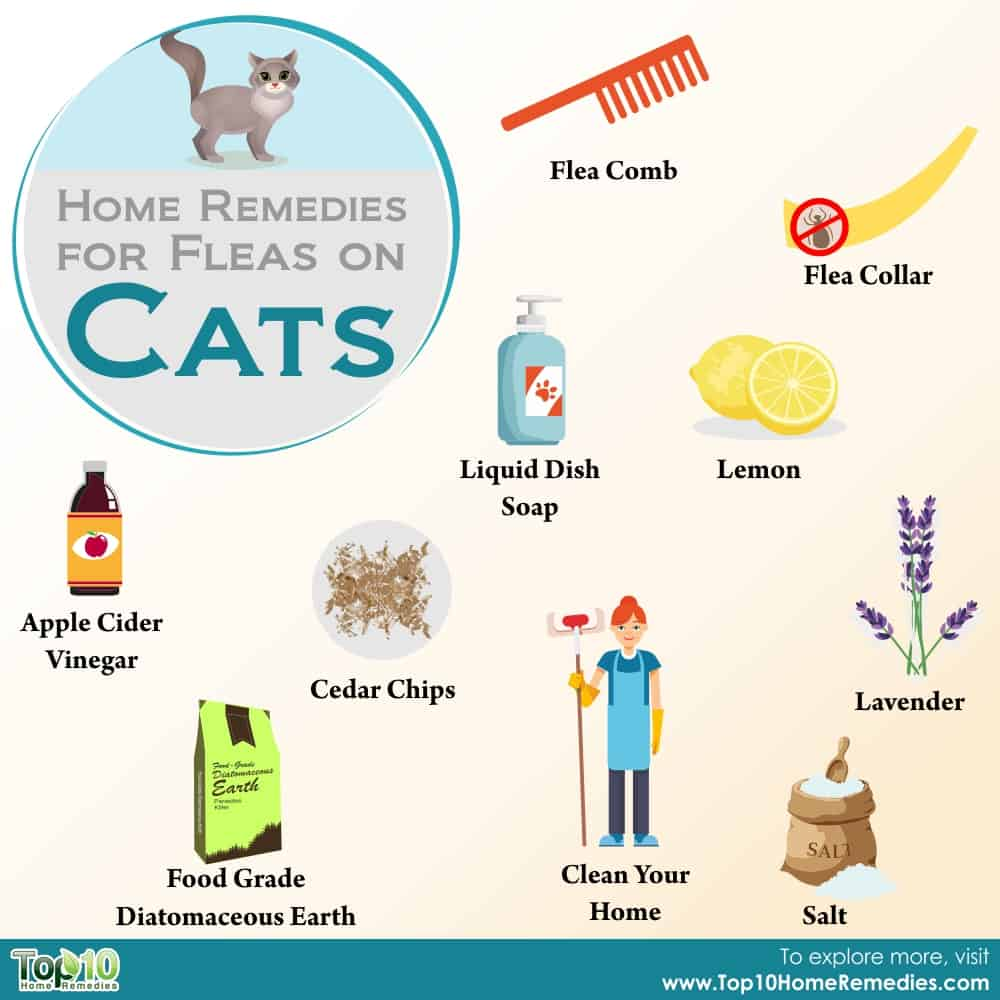 Home Remedies For Fleas On Cats Top 10 Home Remedies