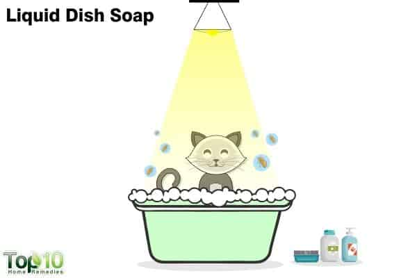 dish soap to treat flea infestation on cats