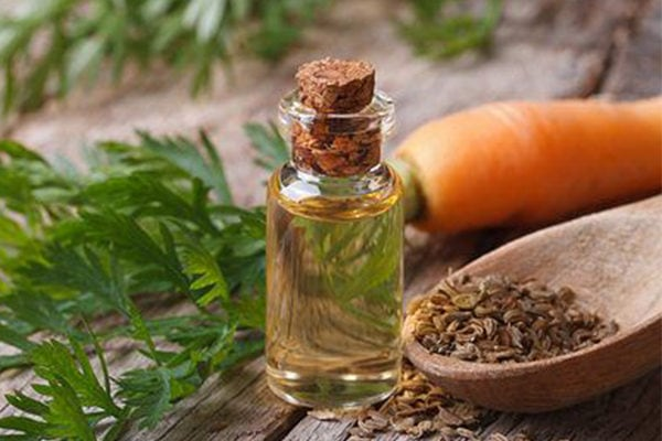 Carrot seed essential oil to fight wrinkles, age spots and signs of aging