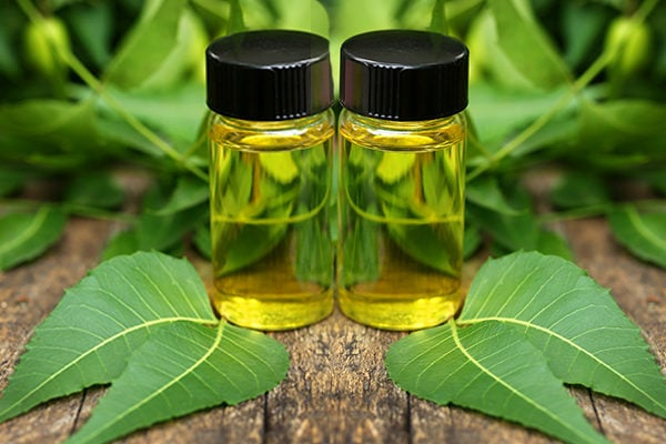 Neem essential oil to fight wrinkles, age spots and signs of aging